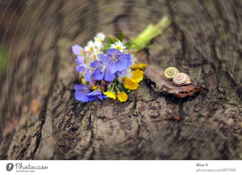 Stillleben Valentinstag Muttertag Natur Frühling Sommer Baum Blume Blüte Tier Schnecke 2 Blühend Blumenstrauß schenken Wiesenblume pflücken Schneckenhaus