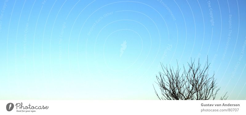 wurzel aus... Himmel Baum Sonne blau Winter Herbst Horizont Ast Spitze Baumstamm Baumkrone Zweig Wurzel Himmelskörper & Weltall Himmelszelt
