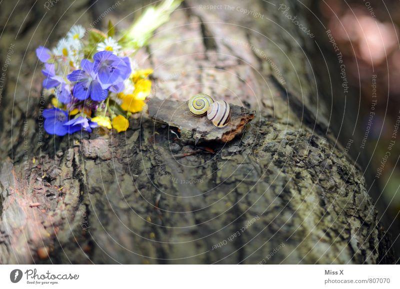 Stillleben Natur Sommer Blume Tier Gefühle Liebe Blüte Frühling Stimmung Idylle Blühend Geschenk Romantik Baumstamm Blumenstrauß Duft