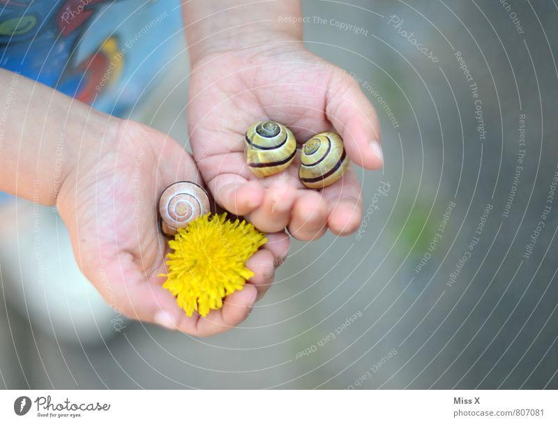 Wiesenfund Mensch Kind Pflanze Sommer Hand Blume Tier feminin Blüte Spielen klein maskulin Kindheit niedlich Finger Neugier