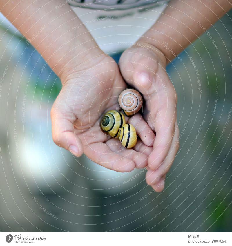 Schnecken Mensch Kind Hand Mädchen Tier Gefühle Junge Spielen klein Stimmung Kindheit niedlich Finger Schutz festhalten Kleinkind
