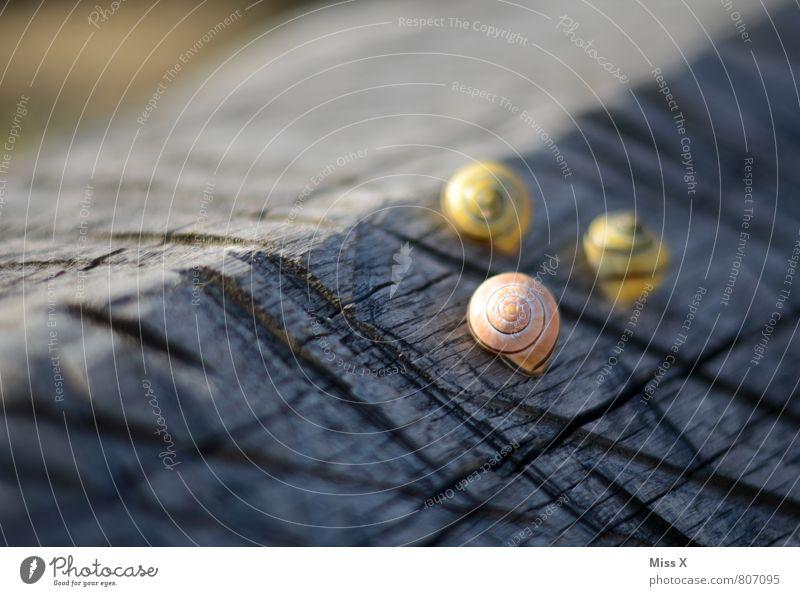 Schnecken ruhig Tier klein Holz Stimmung Gelassenheit Schnecke krabbeln Vorsicht geduldig langsam Schneckenhaus