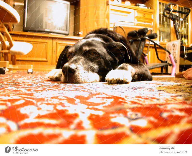 Hundeleben I schwarz Hund Wohnung Langeweile