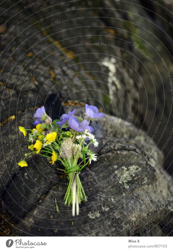 Blümchen Garten Muttertag Pflanze Frühling Sommer Blume Blüte Blühend Duft Blumenstrauß Wiesenblume Gänseblümchen Baumstamm erinnern Grabmal Grabschmuck
