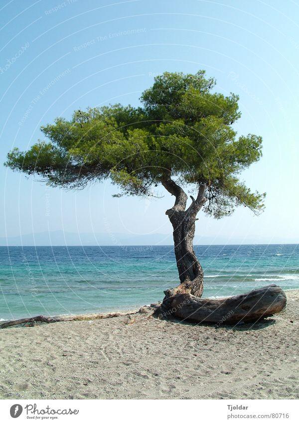 Baum am Strand Wasser Himmel Baum Meer grün blau Strand Ferien & Urlaub & Reisen Einsamkeit Freiheit Sand Küste Horizont authentisch natürlich Baumstamm