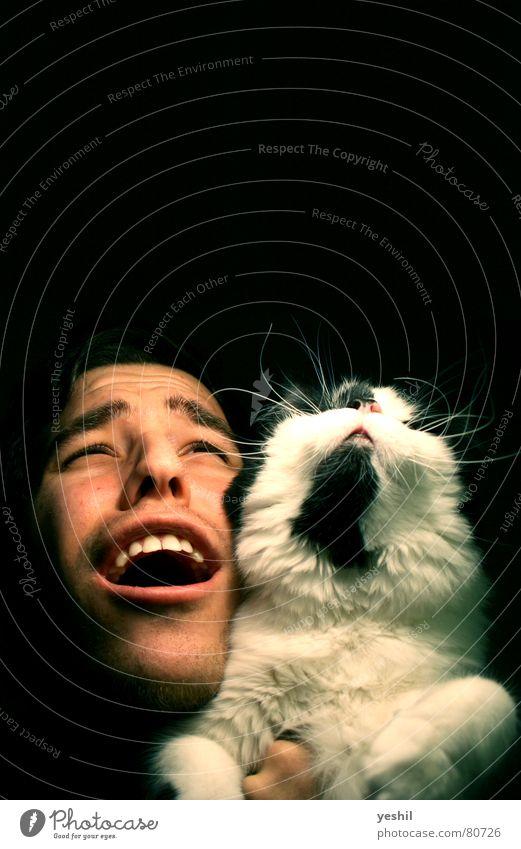 Katzenjammer Mann schwarz Augenbraue Kinn Fell Licht Gesicht Hauskatze Freude Säugetier katzenjammer laufkatze Mensch Mund Nase Haare & Frisuren Blick schnautze