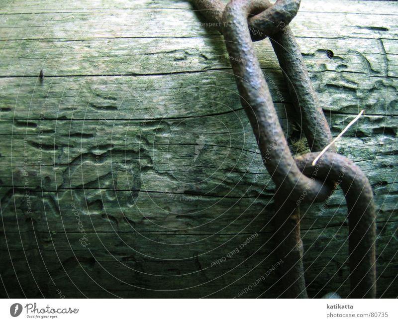 ohne worte. Kettenglied Baum Holz gefangen grün Einsamkeit Hoffnung ruhig Gelassenheit Baumstamm Barriere Naturphänomene Herbst Trauer Verzweiflung