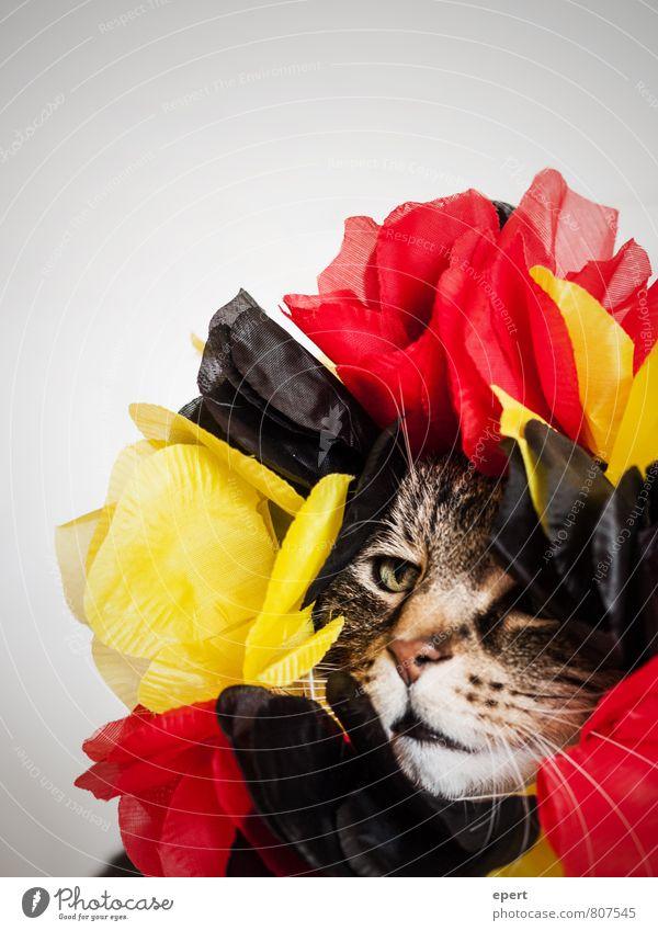 Blühe, deutsches Katerland! Katze rot Tier schwarz lustig außergewöhnlich Feste & Feiern Mode Party Deutschland gold Dekoration & Verzierung verrückt Blühend einzigartig Hoffnung