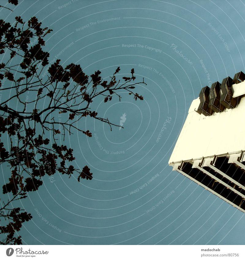 VERSUS Himmel Natur Stadt blau weiß Baum Blatt Wolken Haus Fenster schwarz Leben Architektur Herbst Gebäude Freiheit