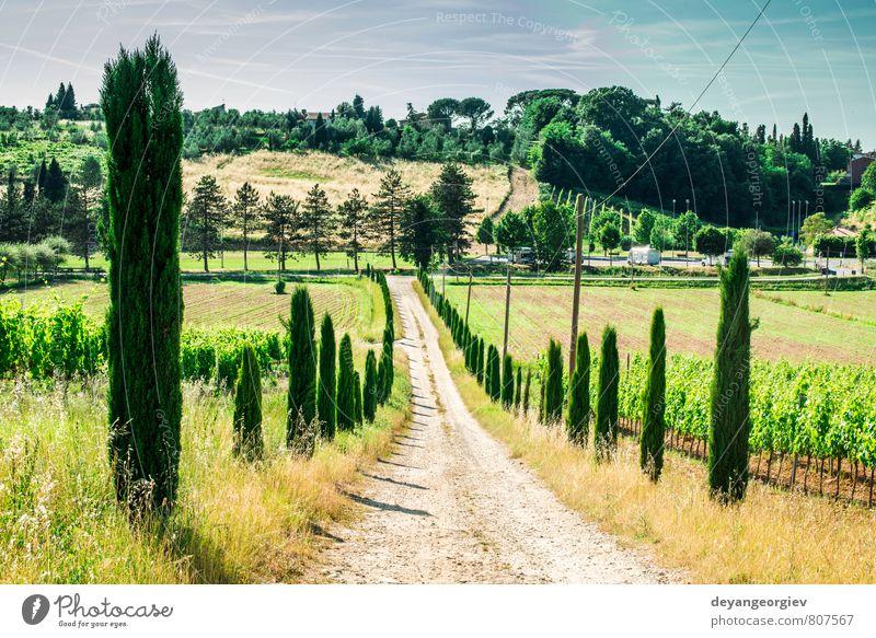 Weinberge und Wirtschaftsstraße in der Toskana Ferien & Urlaub & Reisen Sommer Haus Kultur Natur Landschaft Himmel Baum Wiese Hügel Straße grün Idylle Italien