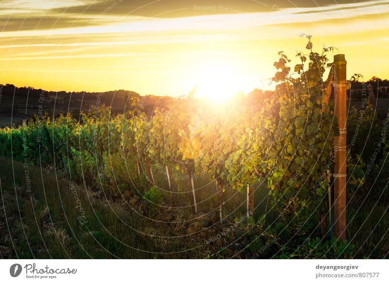 Wiener Innenhöfe bei Sonnenuntergang Frucht Ferien & Urlaub & Reisen Tourismus Natur Landschaft Himmel Herbst Baum Wachstum grün Weinberg Weingut Bauernhof