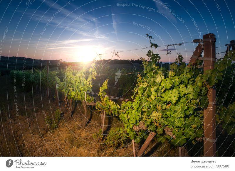 Himmel Natur Ferien & Urlaub & Reisen grün Sonne Baum Landschaft Herbst Wachstum Frucht Tourismus Bauernhof Ernte Frankreich ländlich Tal