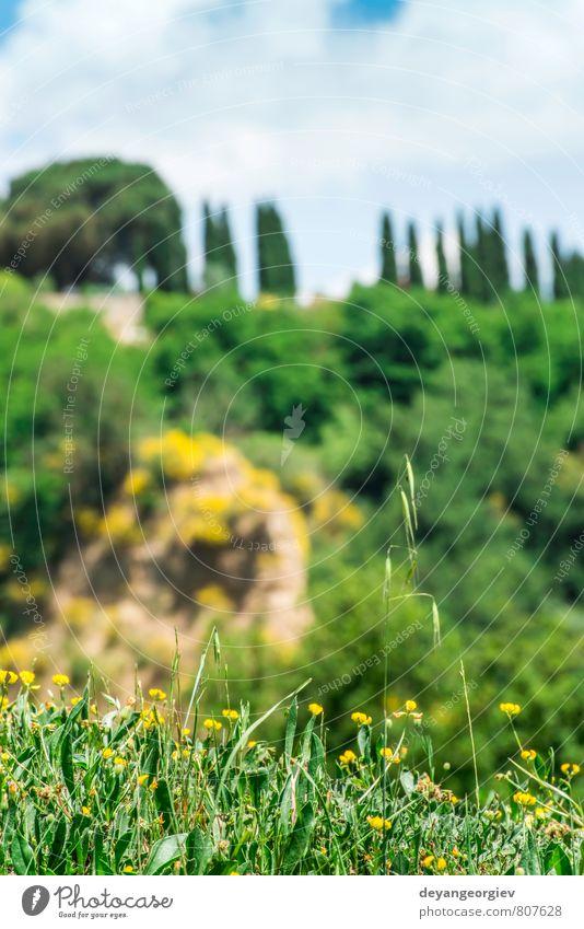 Toskanische Landschaft Sommer Haus Natur Baum Wiese Hügel Straße grün geheimnisvoll Idylle Toskana Italien Italienisch Bauernhof Feld ländlich toskanisch
