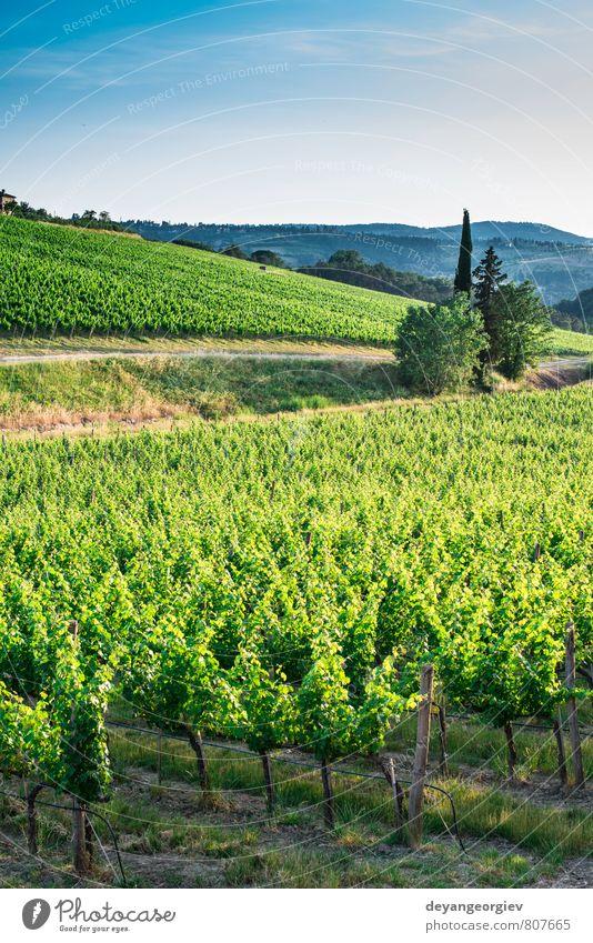 Weinberge in der Toskana Ferien & Urlaub & Reisen Sommer Sonne Haus Natur Landschaft Pflanze Himmel Horizont Herbst Baum Hügel Straße Wachstum grün Italien