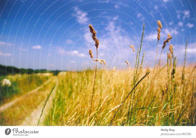 Meine Premiere... Sommer Wege & Pfade Feld Blauer Himmel Ähren August Leben Getreide Landleben Mittagspause