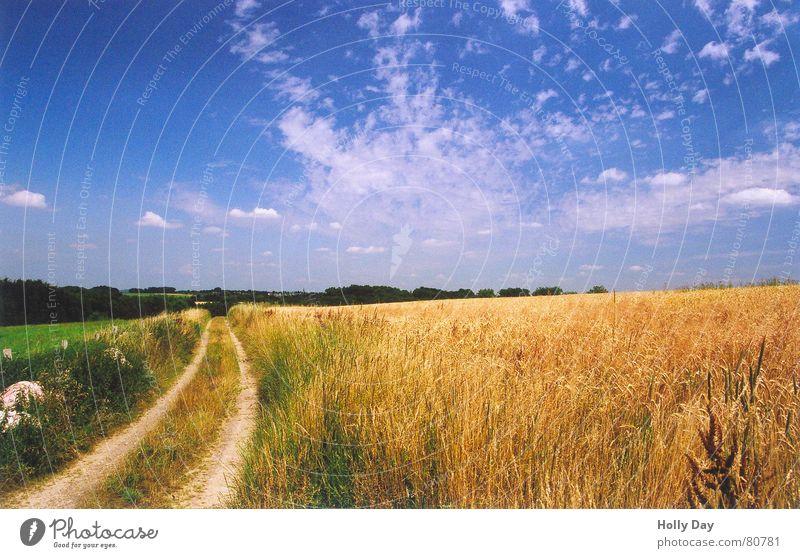 Dieser Weg... Feld Sommer Mittagspause Halm Wolken 2006 Ähren Landleben Wege & Pfade August Blauer Himmel
