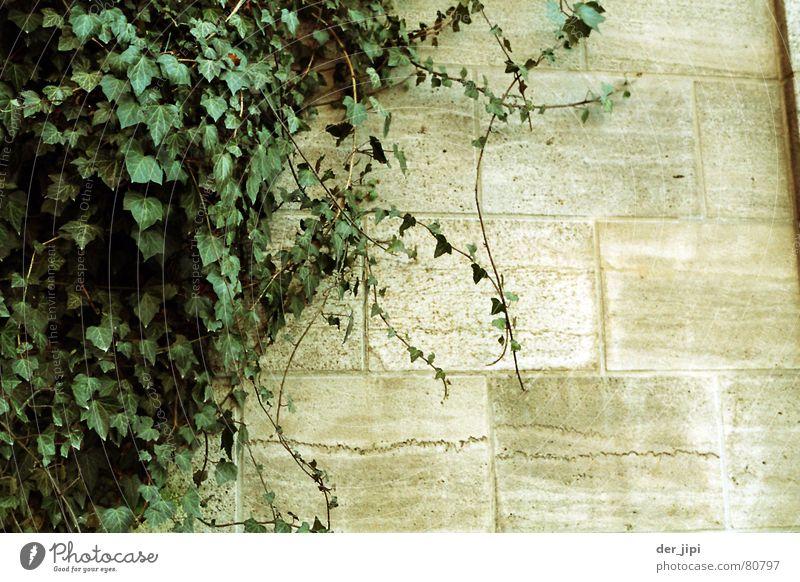 Mauerbewuchs Natur Wasser grün Pflanze ruhig Farbe kalt Wand Garten grau Stein Park Stimmung Umwelt