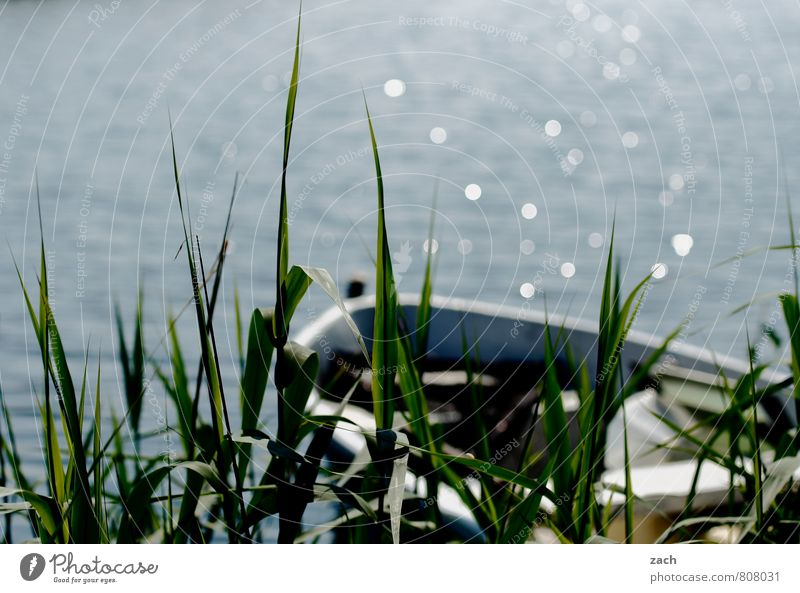 Seelenbalsam | ablegen Angeln Sommer Sonne Frühling Schönes Wetter Pflanze Blume Gras Sträucher Schilfrohr Küste Seeufer Flussufer Teich Bootsfahrt Fischerboot