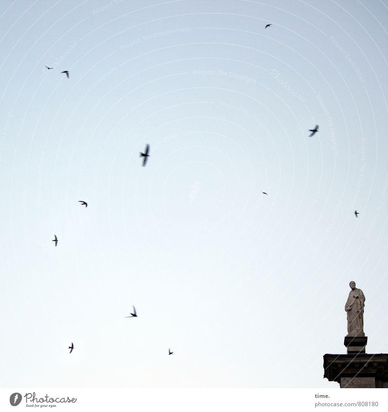 richtig was um die Ohren Himmel Stadt Freude Tier Kunst fliegen Vogel Design stehen Kirche Lebensfreude Vergänglichkeit Dach Bauwerk Zusammenhalt