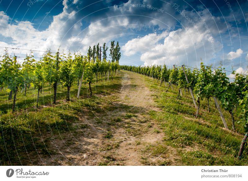 Bergan in die Weinberge Himmel Natur Ferien & Urlaub & Reisen blau schön grün weiß Sommer Erholung ruhig Wolken Umwelt Berge u. Gebirge Leben Gras Freiheit