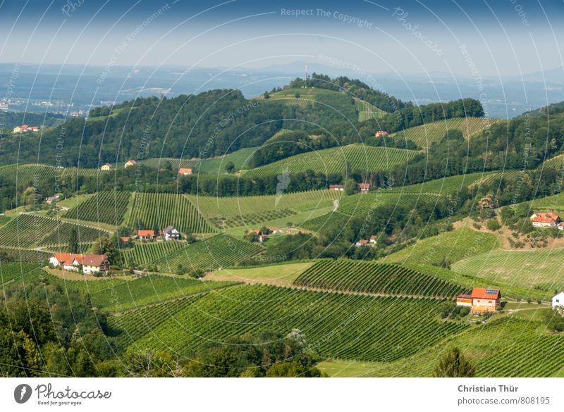 Panoramablick Weinhügel Natur Ferien & Urlaub & Reisen blau Pflanze schön grün Sommer Baum Erholung Landschaft ruhig Freude Wald Umwelt Horizont Tourismus