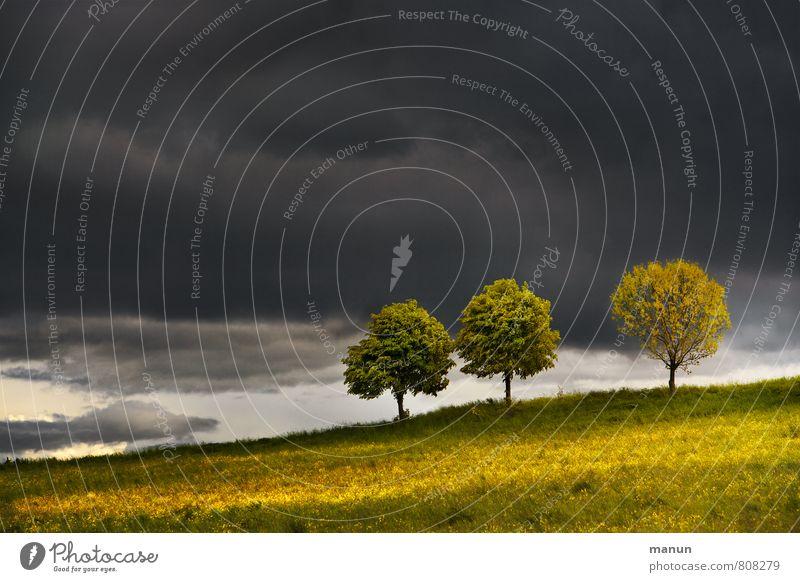 wetterfest Umwelt Natur Landschaft Wolken Gewitterwolken Klima Klimawandel Wetter Unwetter Sturm Regen Baum Wetterumschwung Wetterschutz Wolkenwand