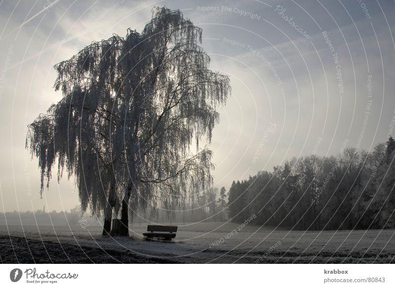 Baum im Winter Raureif ruhig stagnierend gefroren Feld kalt schweigen Gelassenheit Wildnis Einsamkeit Halbschlaf Wetter Umwelt Eis stumm unbeobachtet Frost
