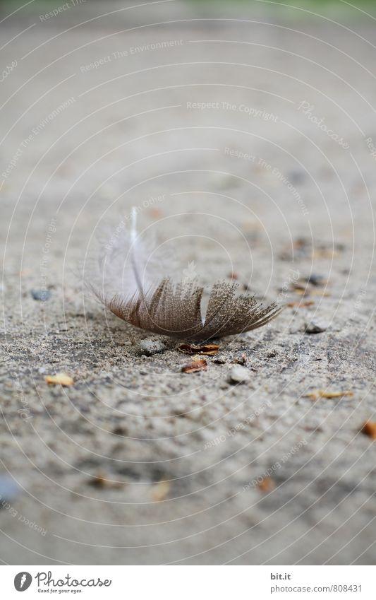 haarig   fedrig Natur Einsamkeit Tier Traurigkeit Gefühle Tod grau Vogel träumen Feder Flügel Kirche Zeichen Schutz Trauer fallen