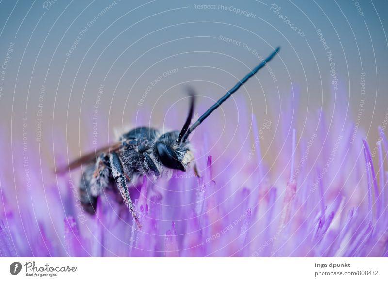 Augenblick! Umwelt Natur Pflanze Frühling Sommer Schönes Wetter Blüte Garten Park Tier Wildtier Biene bestäuben Insekt Hummel 1 berühren Fressen krabbeln