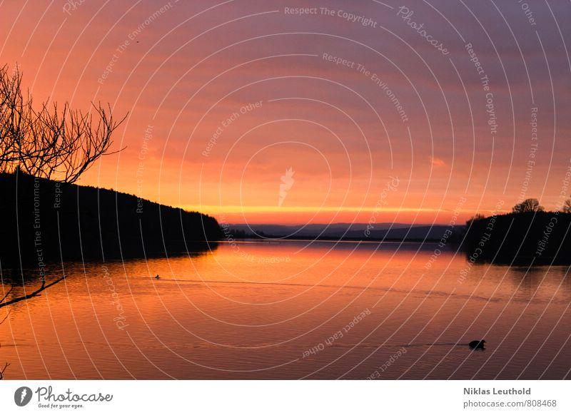 Morgendämmerung Natur Wasser Sonne Baum Einsamkeit Erholung ruhig Landschaft Wolken Ferne gelb Frühling Schwimmen & Baden Freiheit See Freizeit & Hobby