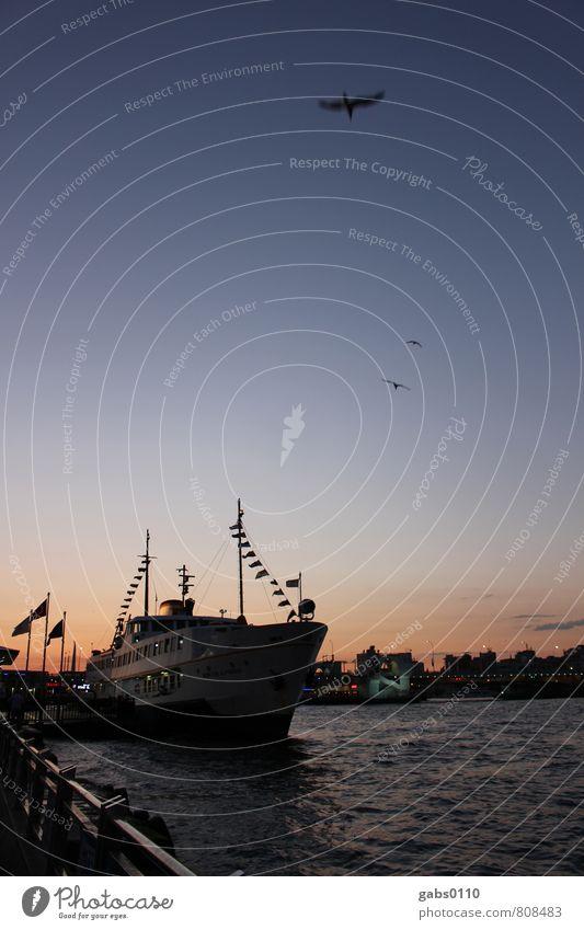 Schiff Ahoi! Verkehr Verkehrsmittel Schifffahrt Bootsfahrt Passagierschiff Fischerboot Ferien & Urlaub & Reisen Himmel Vogel Möwe Wasserfahrzeug Meer Istanbul