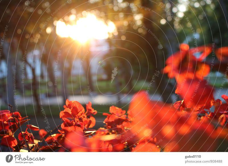 rote Blumen Umwelt Pflanze Blüte Park gelb grün Baum Sonne Romantik Wege & Pfade Spazierweg Wärme positiv Farbfoto Außenaufnahme Menschenleer Textfreiraum Mitte