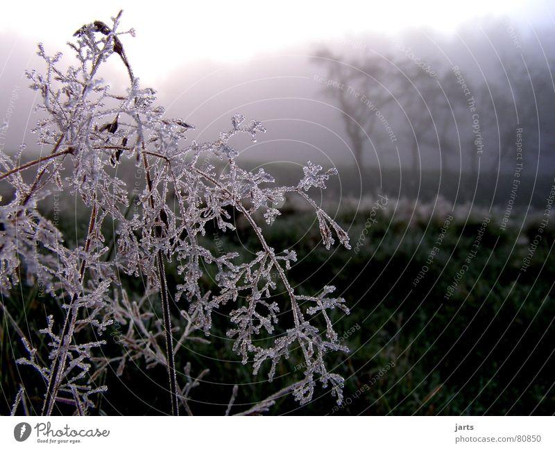 Wintermorgen Baum Wald kalt Schnee Wiese Gras Eis Nebel Frost Eiskristall