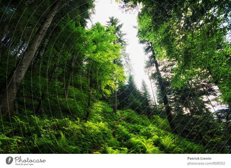Waldfarben Wohlgefühl Zufriedenheit Sinnesorgane Erholung ruhig Meditation Ferien & Urlaub & Reisen Tourismus Ausflug Abenteuer Umwelt Natur Landschaft Pflanze