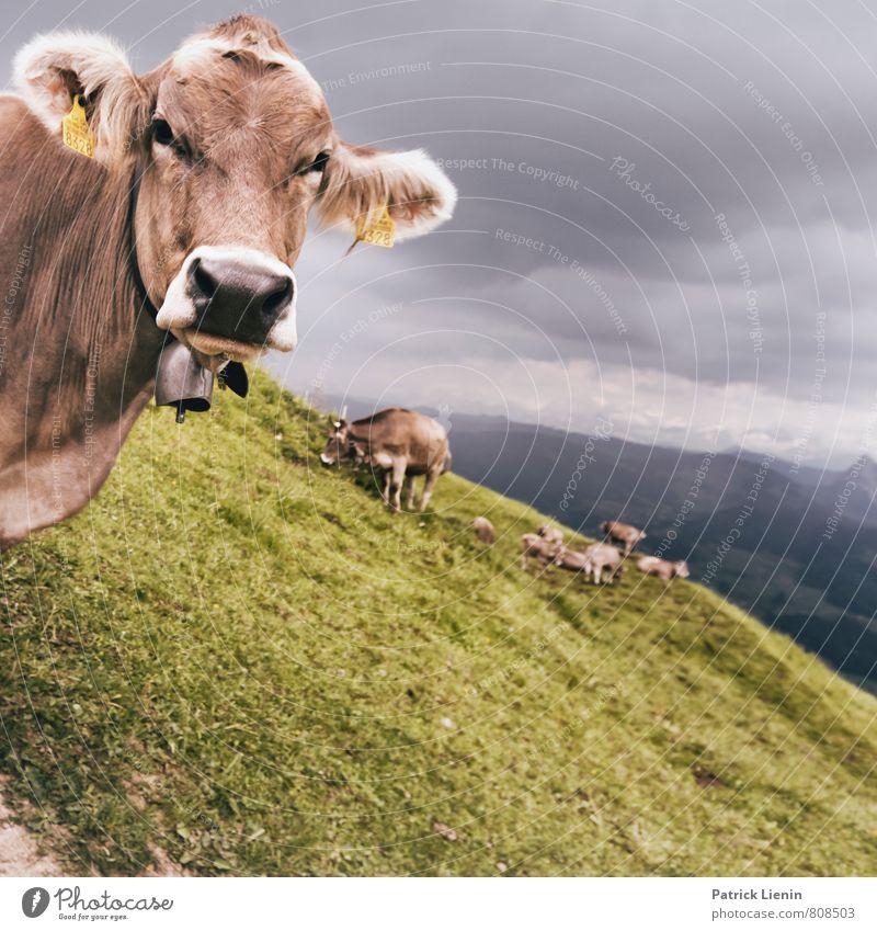 what's up? harmonisch wandern Umwelt Natur Landschaft Pflanze Tier Urelemente Erde Luft Wolken Gewitterwolken Wetter schlechtes Wetter Unwetter Wind Sturm Wiese