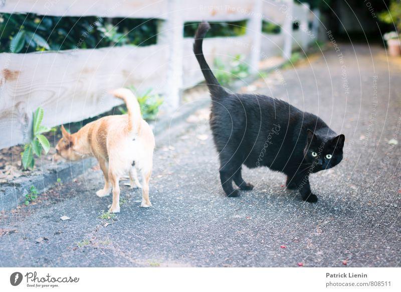 best friends Katze Hund schön Tier Wege & Pfade sprechen lustig Denken gehen Freundschaft warten Fröhlichkeit genießen beobachten Kommunizieren Neugier