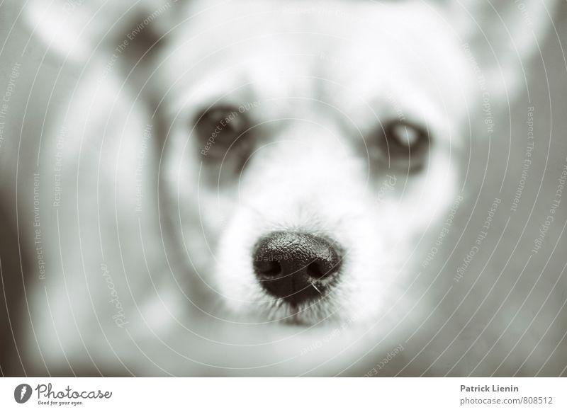 Closer Hund schön Tier klein Freundschaft authentisch frei ästhetisch Fröhlichkeit niedlich Freundlichkeit Schutz Sicherheit Neugier Vertrauen Tiergesicht
