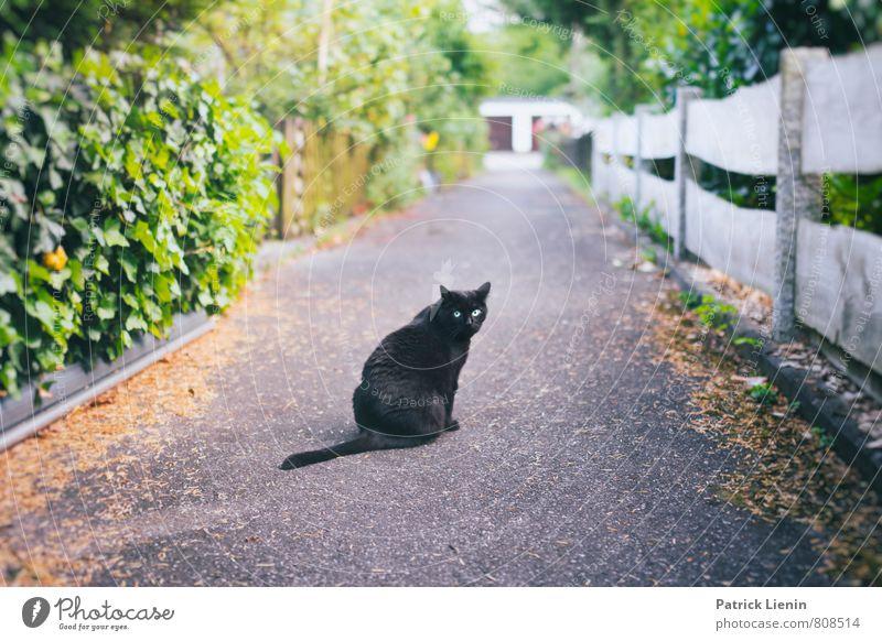Sweety Katze Natur schön Erholung ruhig Tier Freiheit außergewöhnlich Zufriedenheit ästhetisch niedlich Freundlichkeit einzigartig Neugier Gelassenheit