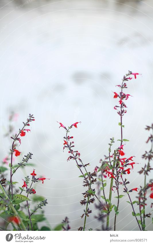 Ringel-Rangel Natur Pflanze Sommer Blume ruhig Liebe Blüte Frühling Glück Feste & Feiern Garten Freizeit & Hobby Wachstum Häusliches Leben Kraft Geburtstag