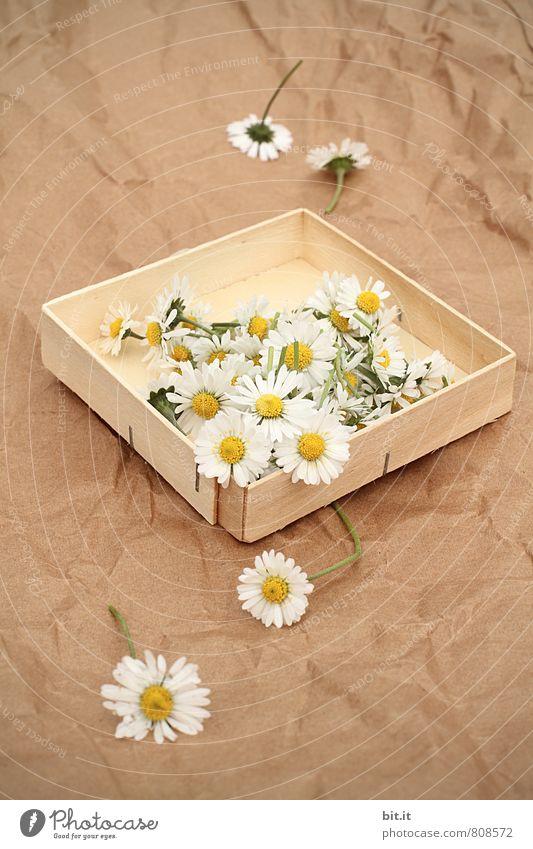 pack den Frühling aus Lifestyle Gesundheit harmonisch Erholung ruhig Meditation Duft Häusliches Leben Feste & Feiern Valentinstag Muttertag Hochzeit Geburtstag