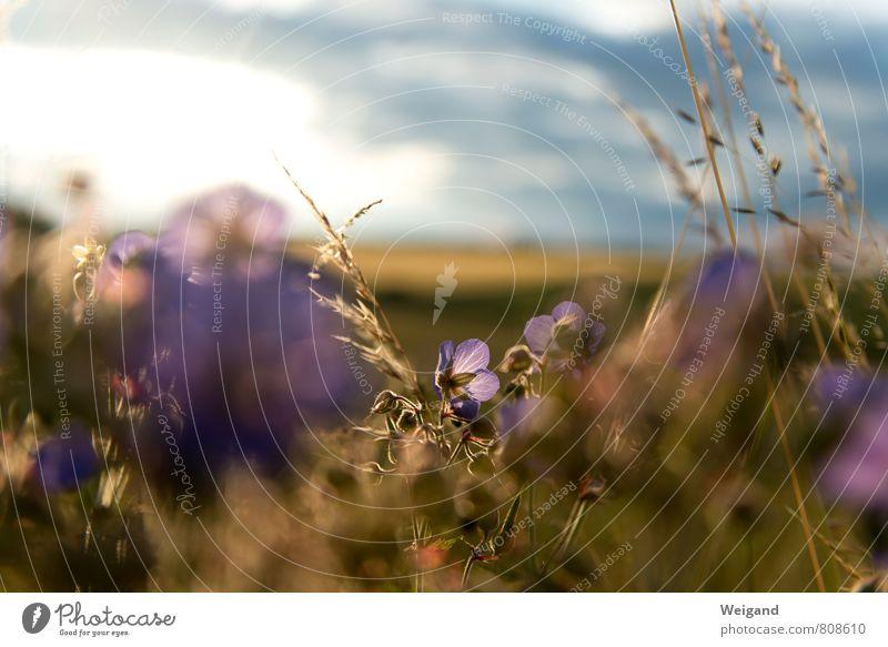 Blütenmeer harmonisch Wohlgefühl Zufriedenheit Sinnesorgane Erholung ruhig Meditation Duft Muttertag Geburtstag Blühend Freiheit Freundschaft Frieden Hoffnung