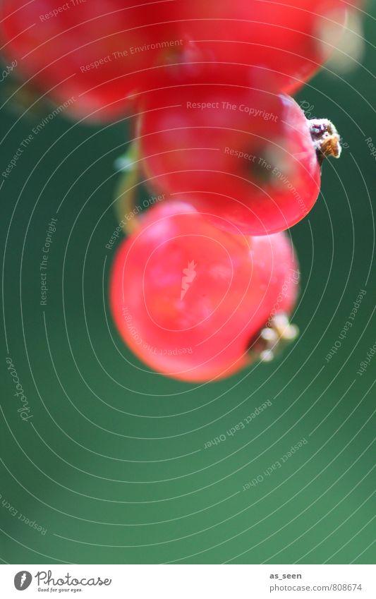 beerig II Dessert Marmelade Picknick Bioprodukte Vegetarische Ernährung Erfrischungsgetränk Saft Gesundheit Wellness Garten Umwelt Natur Pflanze Sträucher