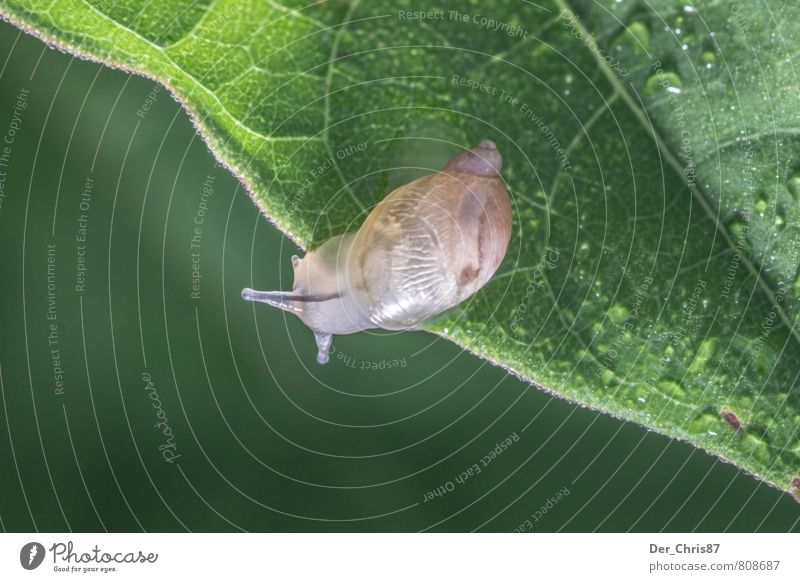 Tschüss Schnecke Natur grün Erholung Blatt Tier elegant Zufriedenheit Wildtier Wassertropfen Freundlichkeit Neugier entdecken rennen Mut Schnecke Ausdauer