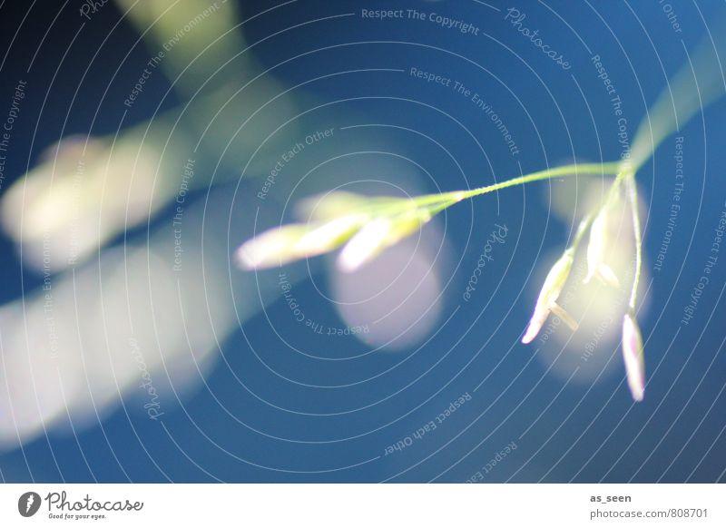 Pollenflug Natur blau Pflanze Farbe weiß Sommer Erholung Umwelt Leben Bewegung Wiese Gras Blüte Frühling Garten Feld