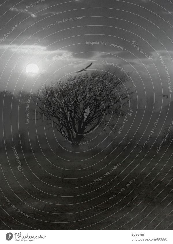 Baum dunkel Nacht Feld unheimlich Nebel gruselig Baumstamm Nebellampe trist Schleier Halbschlaf geisterhaft ruhig Nebelschleier Nachtschwalbe außergewöhnlich