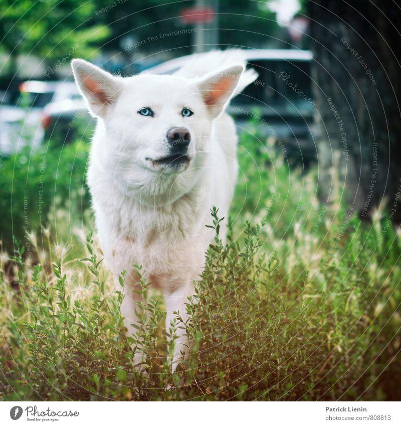 Streuner Hund Natur Stadt schön weiß Tier Umwelt Bewegung Wiese außergewöhnlich wild elegant Wildtier authentisch Armut Urelemente