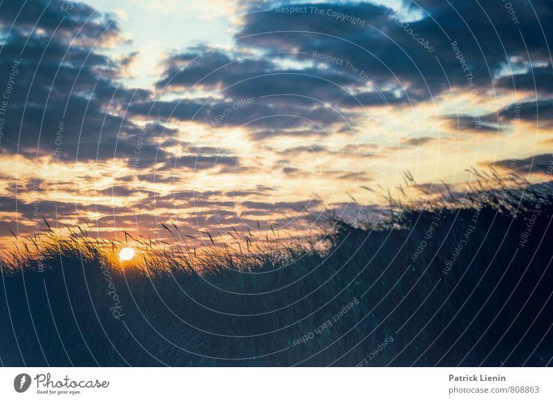 Morgensonne über den Dünen harmonisch Wohlgefühl Zufriedenheit Sinnesorgane Erholung Tourismus Ausflug Abenteuer Umwelt Natur Landschaft Urelemente Luft Himmel