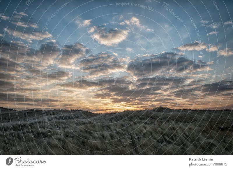 Morgensonne auf Amrum Himmel Natur Ferien & Urlaub & Reisen Pflanze Sommer Meer Erholung Landschaft Wolken ruhig Ferne Strand Umwelt Freiheit Zufriedenheit