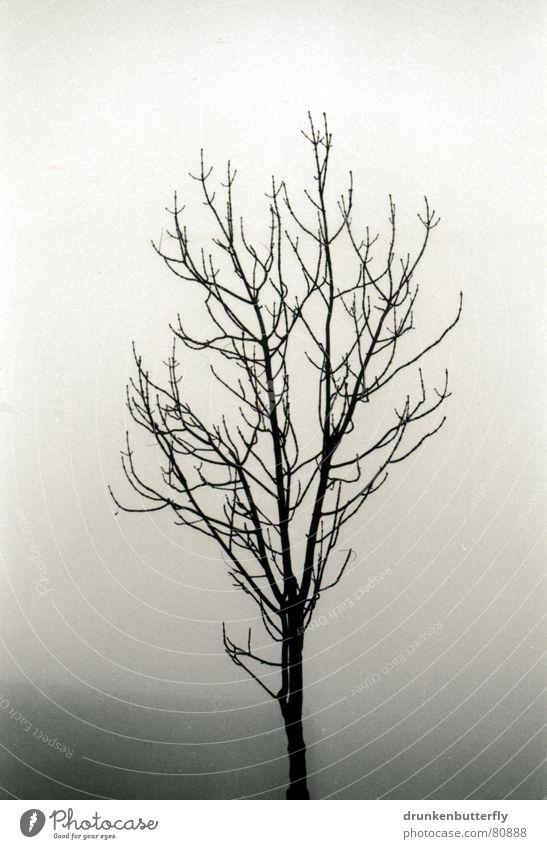 lonely tree Baum Baumstamm Nebel schwarz trüb Einsamkeit kalt dunkel Winter unklar abgelegen trist Ast Zweig Himmel trübung Schwarzweißfoto Traurigkeit
