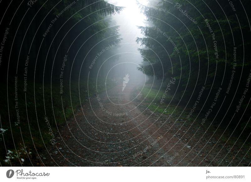 ab in den Nebel Wald grün Fußweg Sauerland Baum Tanne Herbst Wege & Pfade